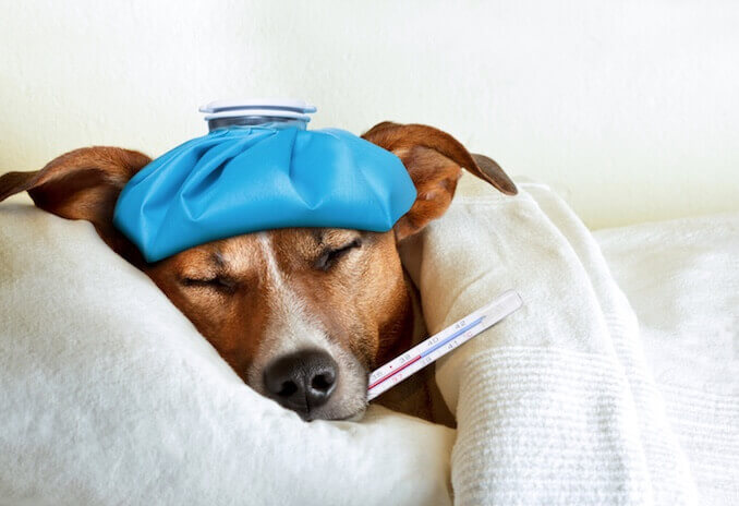 Guidelines for OTC Medicine for Pets: What Pet Owners Need to Know