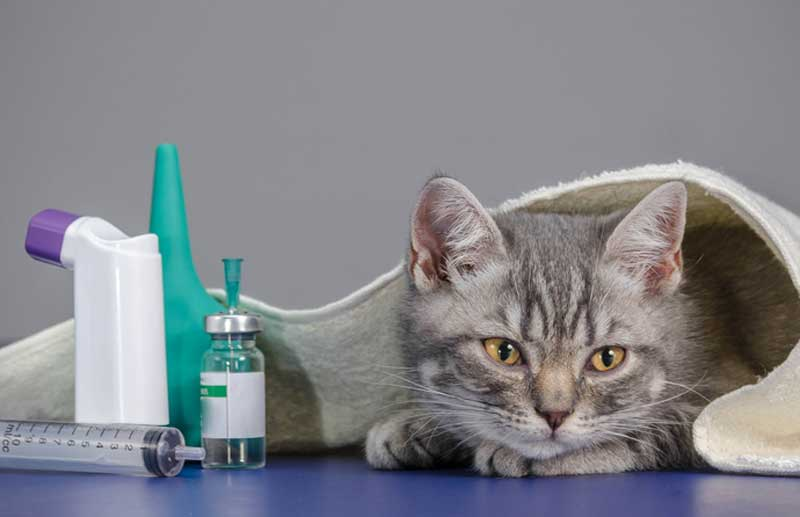 No Need for a Prescription with These Popular Vet Meds