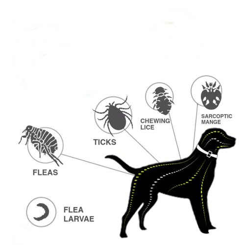 Flea, Tick, Fly and Mange Control