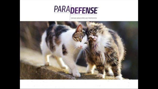 Paradefense Cats