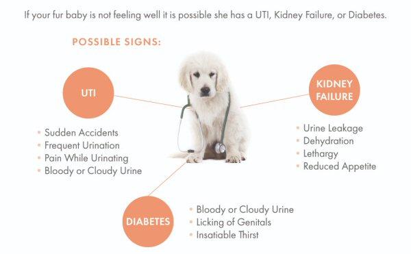 Kidney Failure In Dogs Kidney Disease In Cats