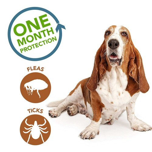 Flea and Tick Spot-Ons
