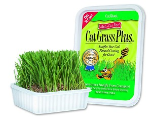Natural hairball remedy that also satisfies your cat's urge to eat fresh vegetation, saving your valuable indoor plants!