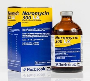 Noromycin 300 (oxytetracycline HCl, 300 mg/ml) is a broad-spectrum antibiotic that is effective against a wide range of Gram-positive and Gram-negative organisms - administer IM, IV, SQ.